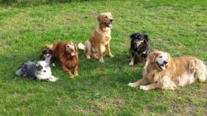 Sally Petty's dogs